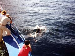 La Gomera, Delfine auf der Bugwelle.