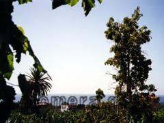 La Gomera, Wohnen zwischen Bananenstauden im Valle im Valle Gran Rey, von unserer Ferienwohnung zwischen den Bananen einer Plantage aus betrachtet.