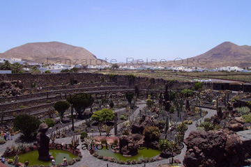 Blick in den Kakteengarten Jardin de Cactus auf dem Kanaren, Insel Lanzarote.