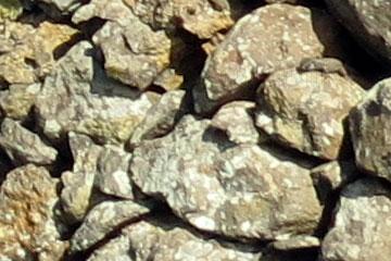 Rechts oben in diesem Bild sieht man die Eidechse zwischen den erstarrten Lava-Steinen die zu einer Mauer aufgeschichtet sind sitzt.