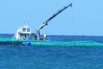 Fischzucht im Atlantik vor der kanarischen Insel La Palma, Spanien.