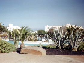 Agavengewächs in der Ferienanlage Los Molinos.