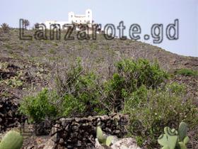 kaktus läuse farbstoff